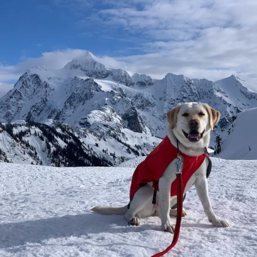 little-angels-service-dogs-program-standards-dog-in-mountains