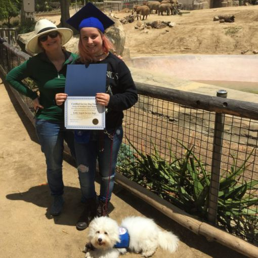 little-angels-service-dogs-recent-graduates-avery-large