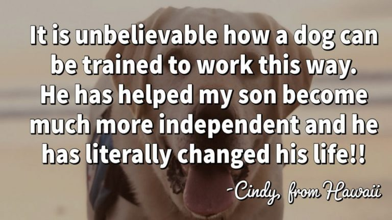 little-angels-service-dogs-cindy-testimonial