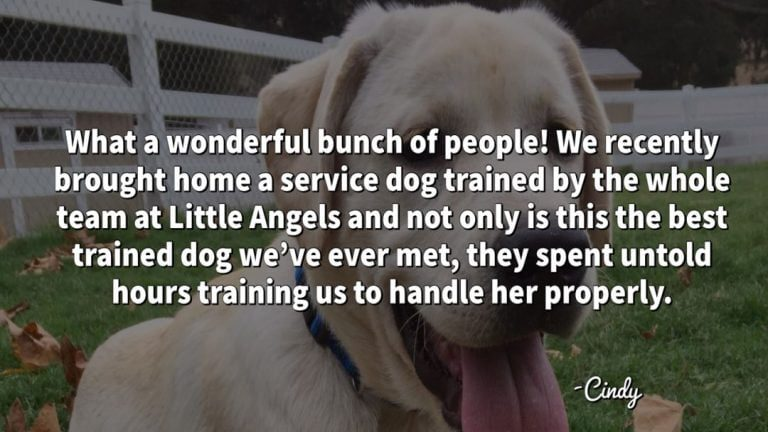 little-angels-service-dogs-cindy-testimonial-additional