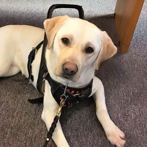 little angels service dogs application hub