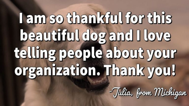 little-angels-service-dogs-julia-testimonial