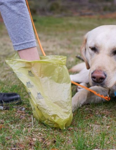 little-angels-service-dogs-earth-day-2021-poop-cleanup