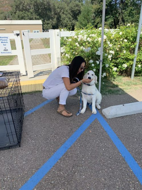 little-angels-service-dogs-happy-adoptions-dog-mom
