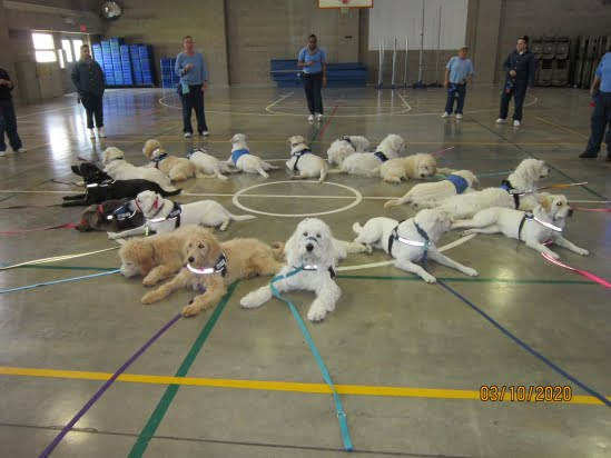 little-angels-service-dogs-get-involved-prison-program-womens-facility-circle-of-dogs