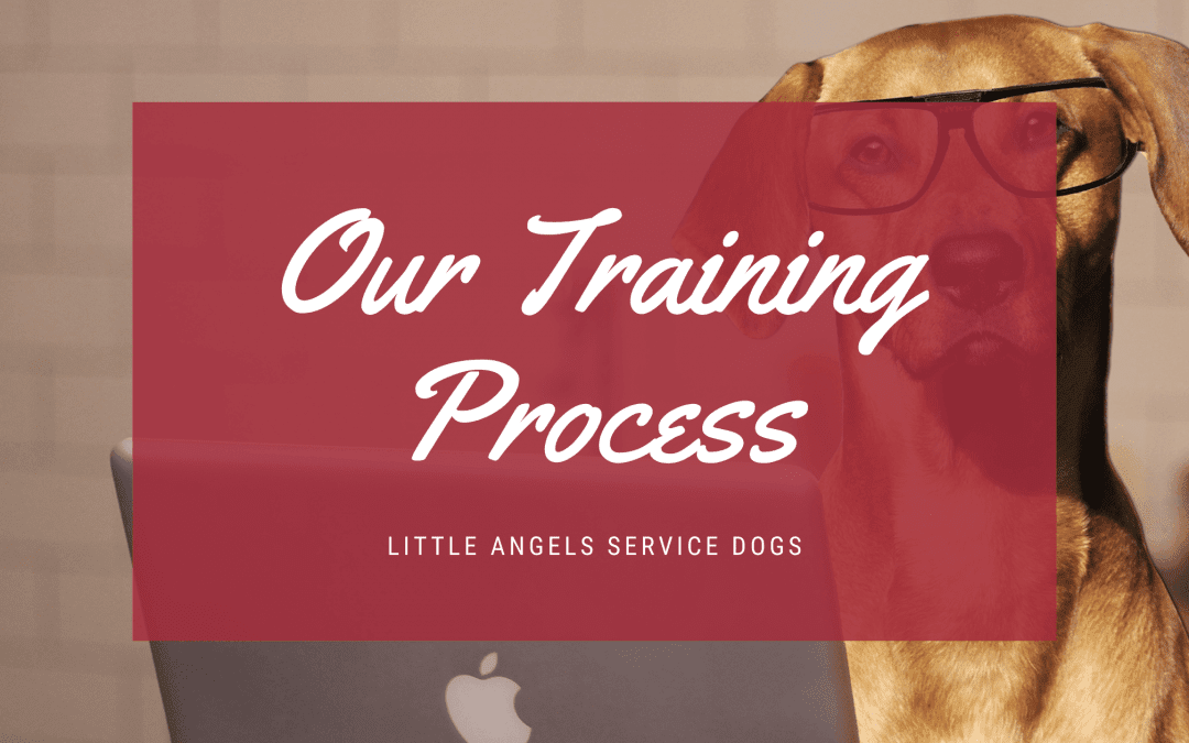 The Little Angels Training Process