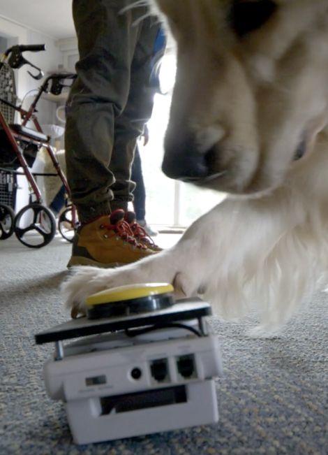 autism service dog little angels diabetic alert dogs