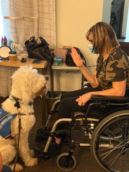little-angels-service-dogs-our-services-mobility-assistance-laboradoodle-grad